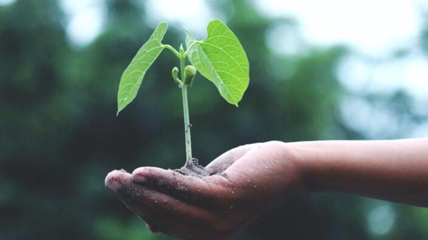 DKV y ECODES lanzan un informe del impacto del cambio climático en la salud