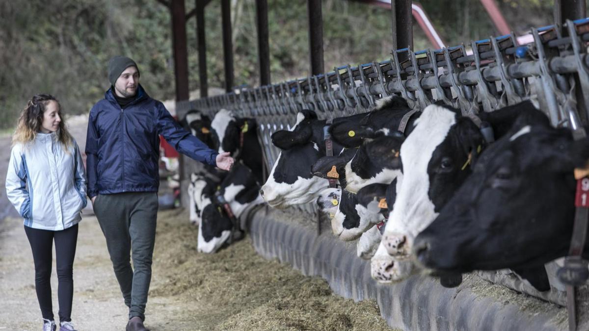 Una ganadería de leche.