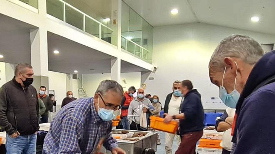 Una empresa de Asturias eleva el precio del centollo a 25 euros el kilo
