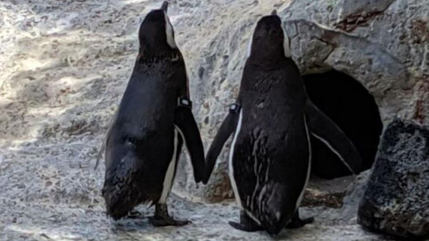 "Una pareja de pingüinos gays, padres ""ejemplares"""