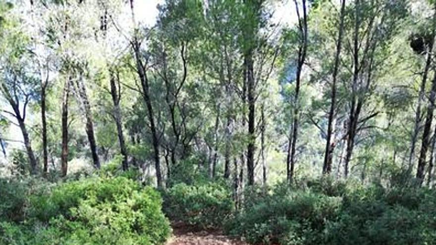Agentes del Govern denuncian nuevas alteraciones ilegales del paisaje de la Serra