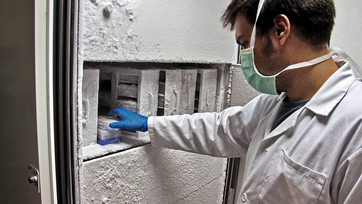 Imagen de archivo del  biobanco del hospital  La Fe de València. efe