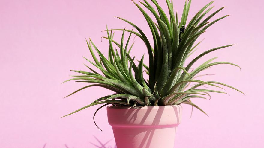 Cómo cuidar tus plantas de interior para que estén perfectas
