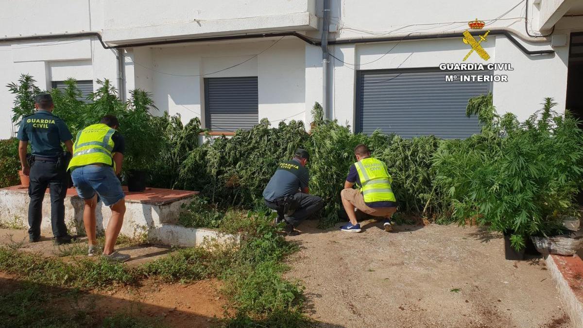 Destapan tres plantaciones de marihuana en Vistabella, Rosell y Orpesa