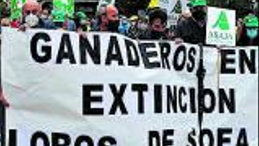 Asturias recurre la orden que prohíbe la caza del lobo