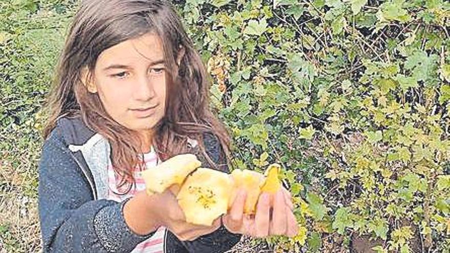 Setas comestibles pero también venenosas en los montes de Celanova este verano