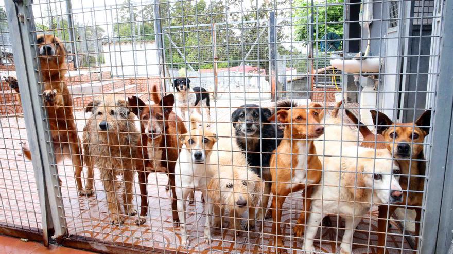 El refugio de A Madroa lanza un SOS: estos son algunos de los muchos animales que buscan una familia