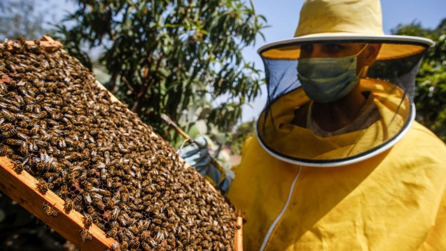 La vuelta al mundo de las abejas