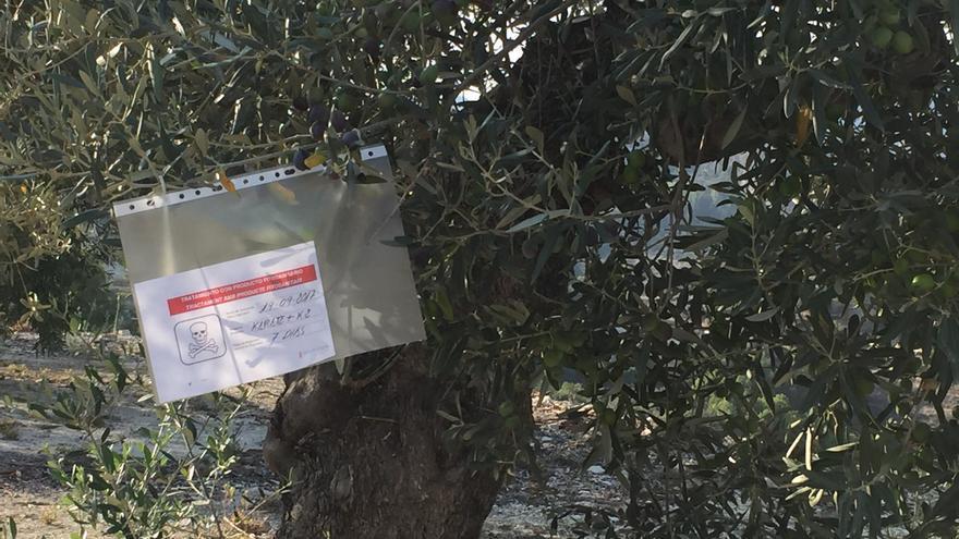 Asaja-Alicante denuncia que el aumento de árboles infectados por la Xylella confirma el fracaso del plan para su erradicación