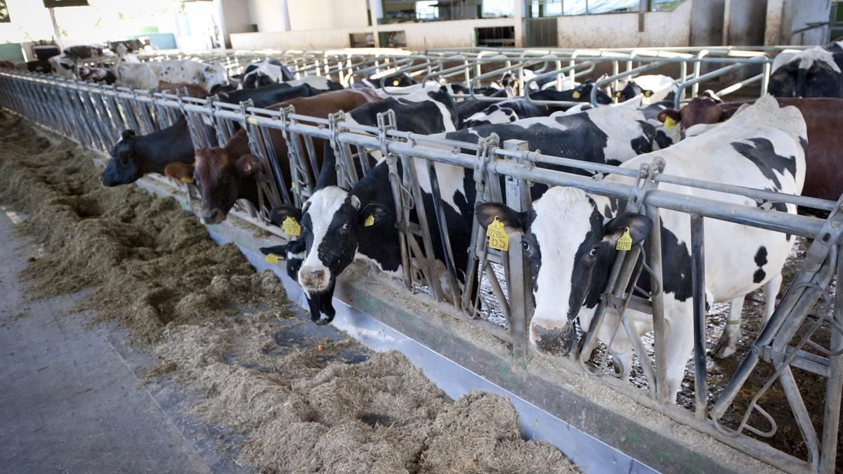 Ganadería de vacas de leche