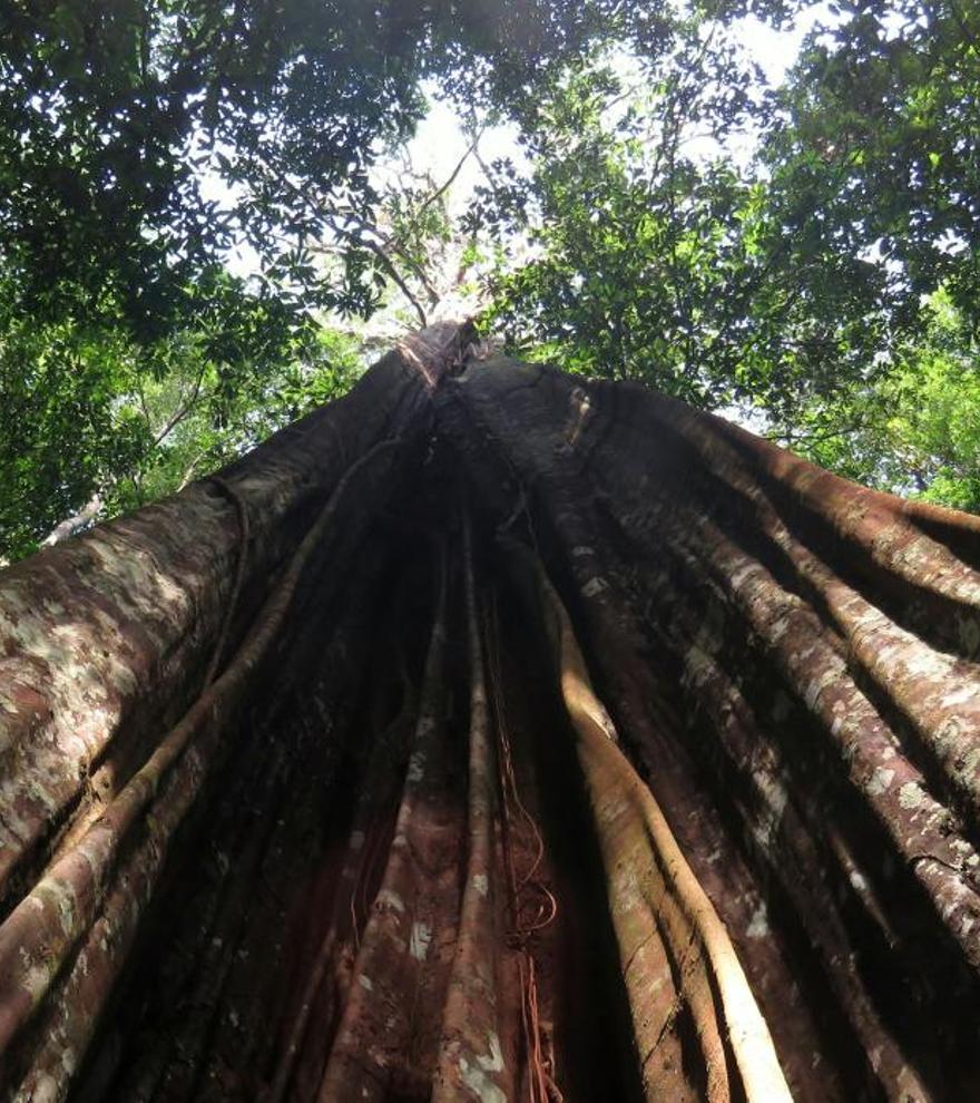 Plantean prohibir la deforestación en la Amazonía brasileña durante cinco años
