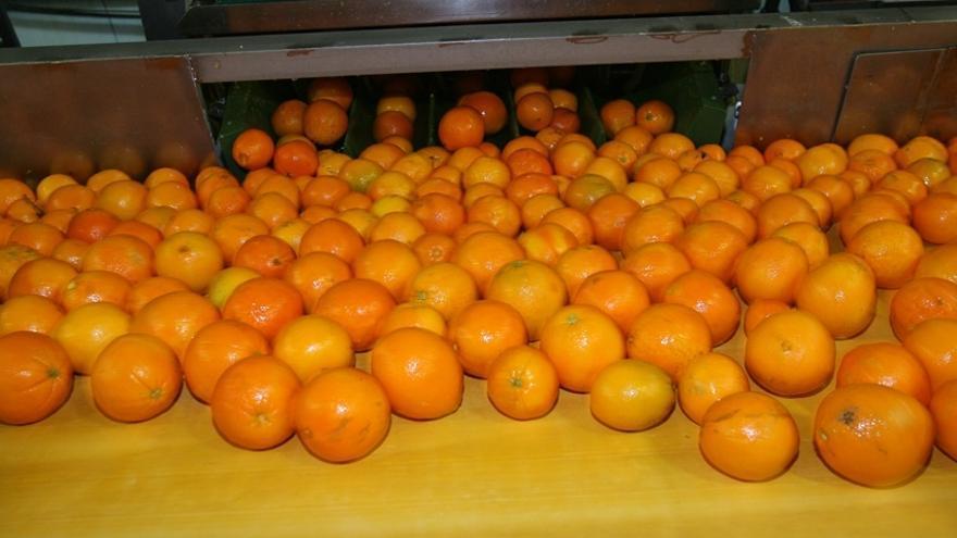 Zumo de naranja gratis para desayunar en 81 bares de València