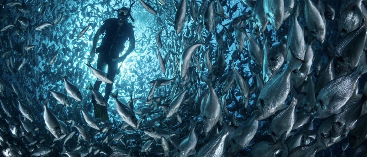 Método revolucionario para contar peces en granjas marinas