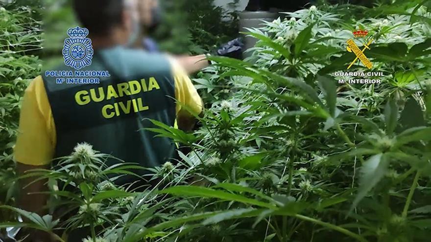 Desarticulada una banda de narcotráfico que operaba entre Holanda y España