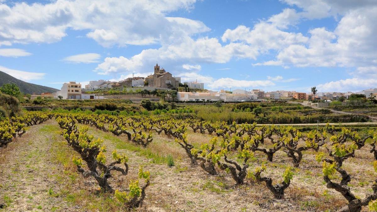 El Poble Nou de Benitatxell tiene una importante tradición del cultivo de la uva moscatel de herencia romana.