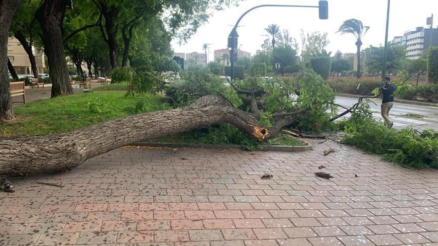 El granizo, protagonista de la tormenta de este lunes en la Región