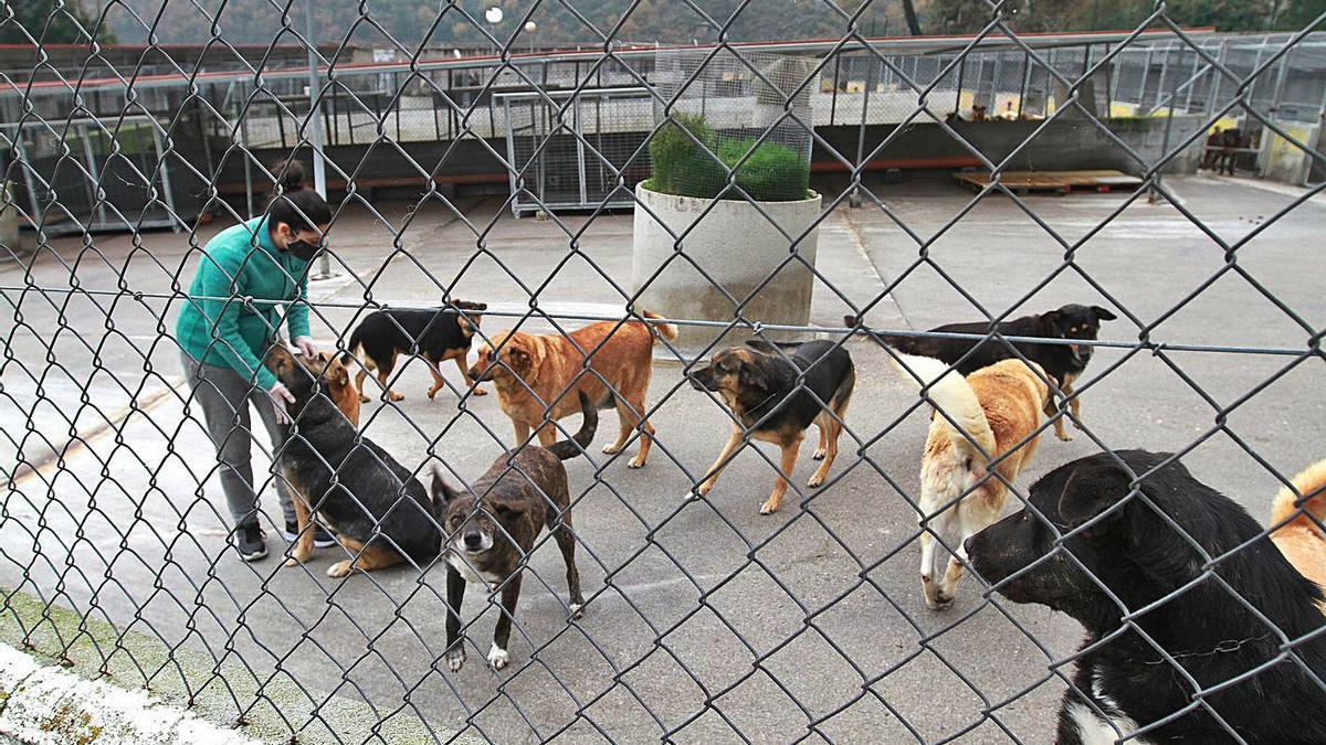 Area Cid, ayer, en las instalaciones del albergue de animales del Concello.   | // IÑAKI OSORIO