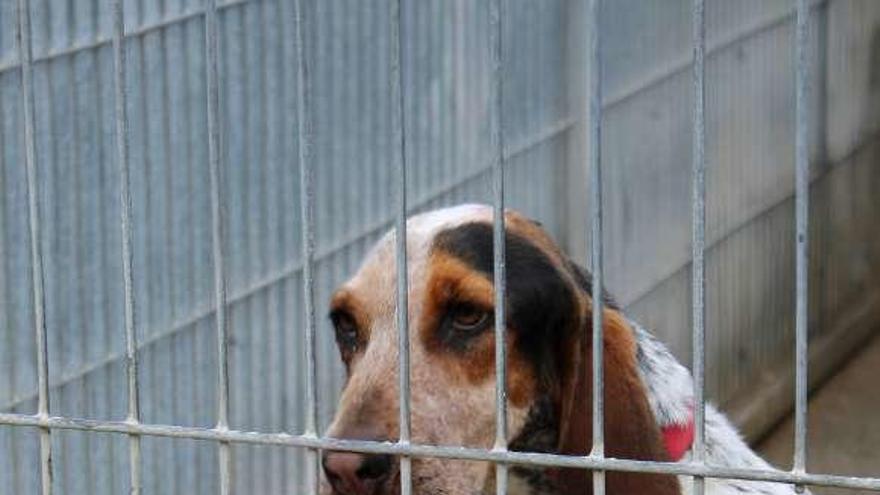 Romero pide al gobierno local que tome medidas ante el abandono de animales