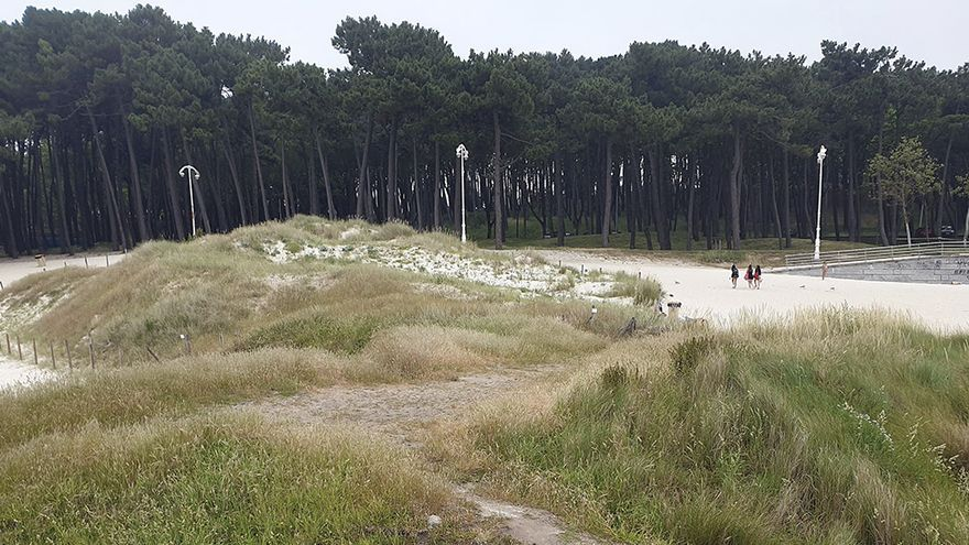 Vigo activa la regeneración de Samil: 5.000 m² más de duna y zonas verdes