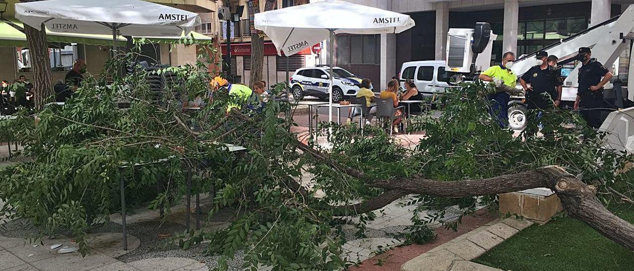 La pesada rama cayó sobre una mesa y las sillas vacías de la terraza de un bar en la plaça de Baix de Petrer.