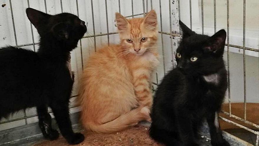 La protectora, desbordada al dispararse el abandono de gatas embarazadas