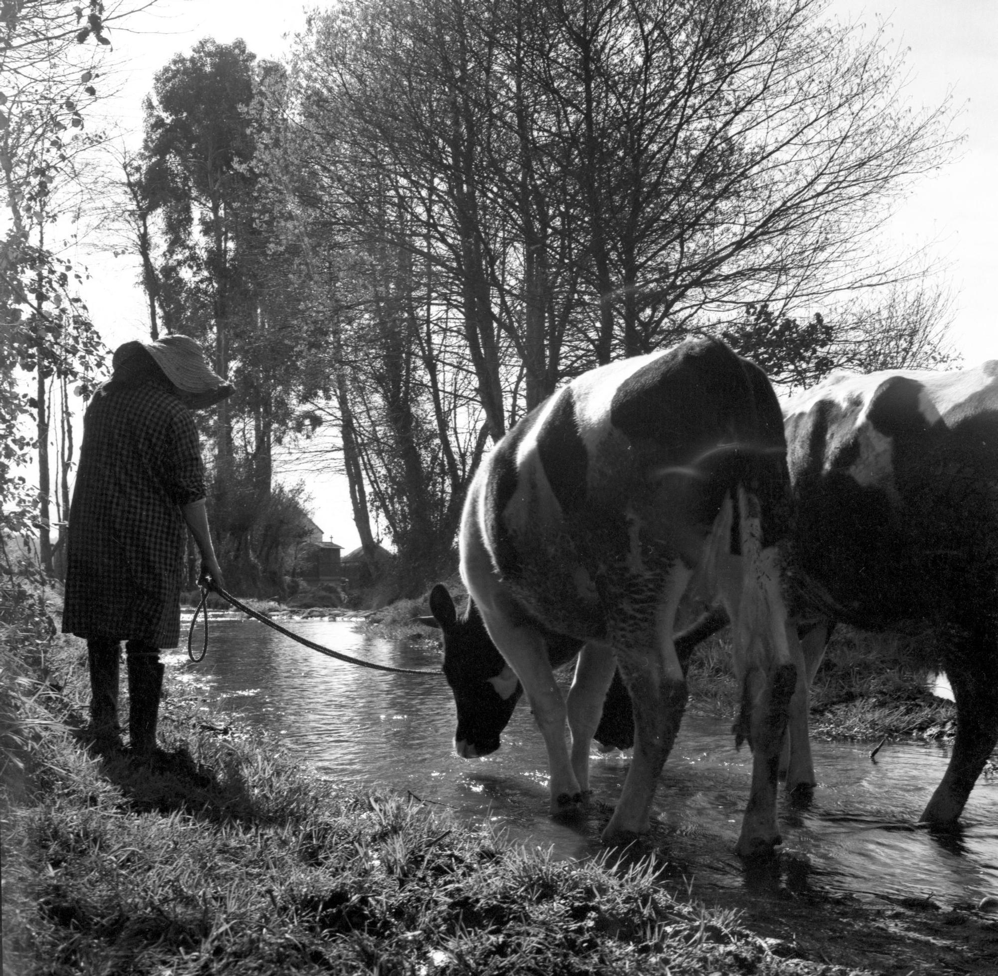 Justo del Castillo. Escena rural, h. 1960.jpg