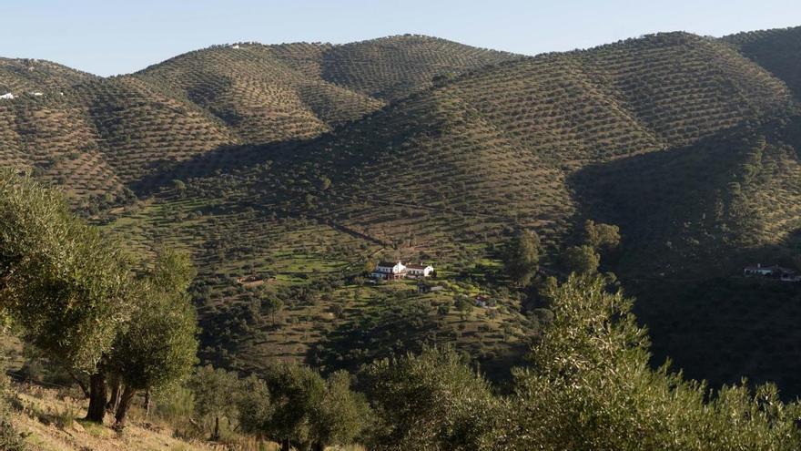 El paisaje del olivar andaluz, candidato español a la Lista de Patrimonio Mundial de la Unesco