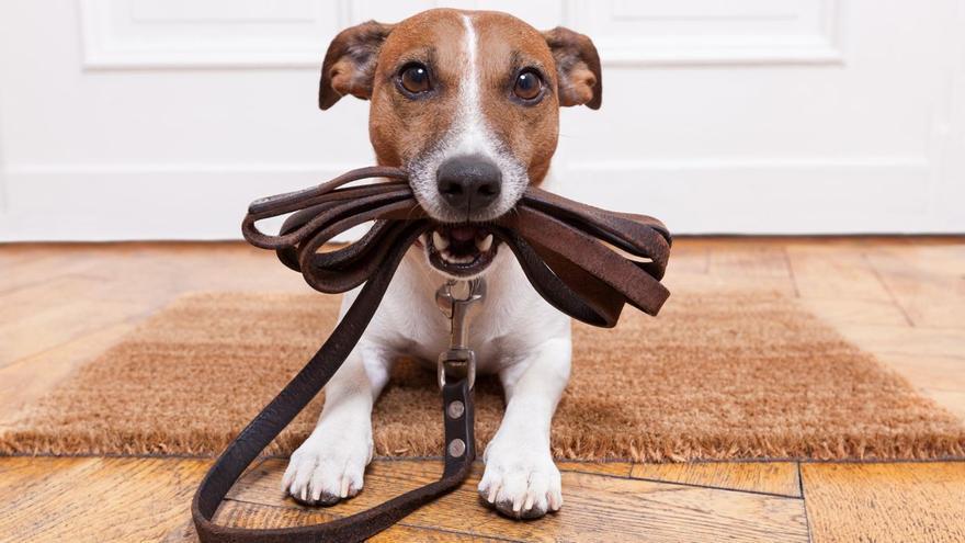 Cómo adoptar la mascota ideal este fin de semana en Vila-real