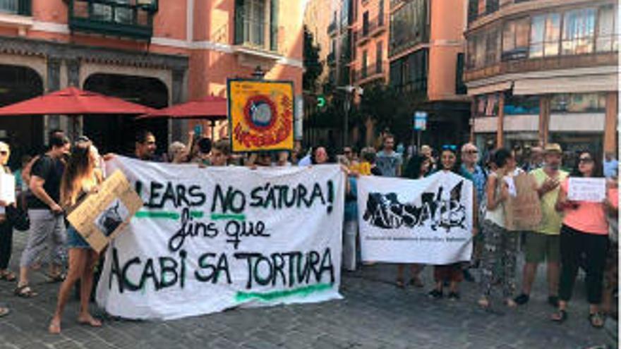 Tierschützer protestieren gegen Stierkampf vor Palmas Rathaus