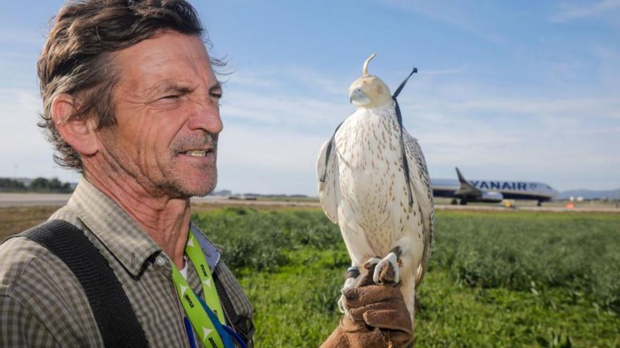 2019 stießen 218 Vögel mit Fliegern auf Mallorca zusammen