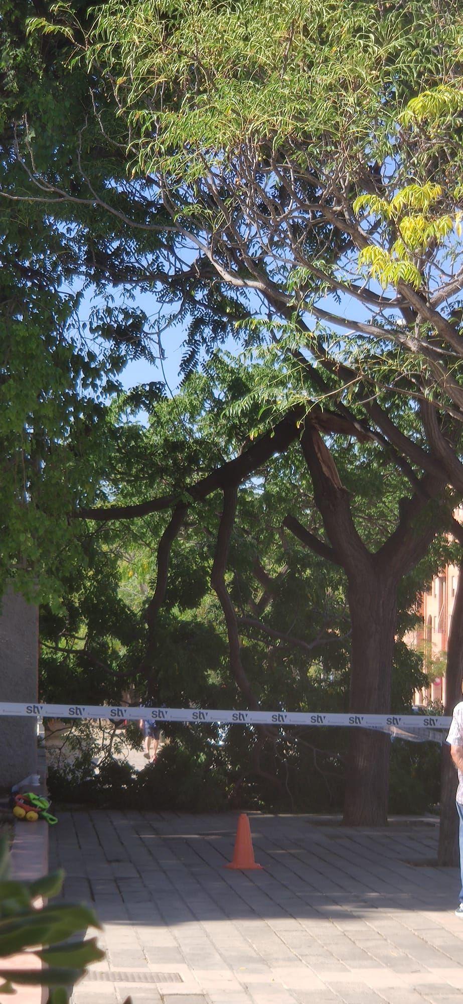 La rama de un árbol se desploma cerca del parque de San Blas, en Alicante