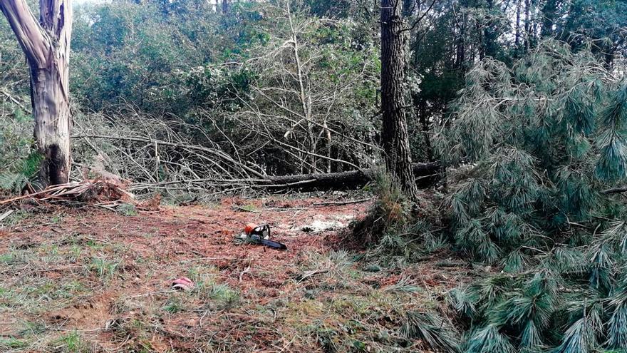 Un estradense de 43 años muere al caerle encima un árbol en Tabeirós