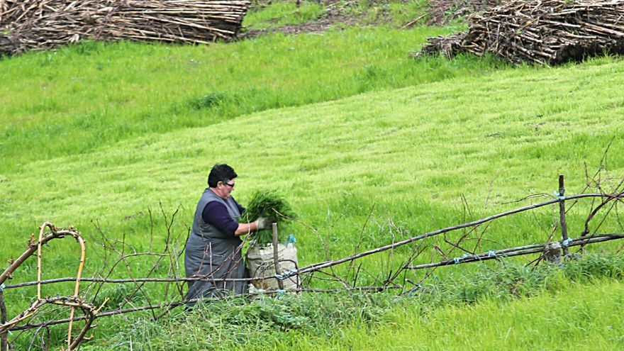 El sector agroganadero demanda a la Xunta movilizar 31.400 hectáreas de tierras abandonadas