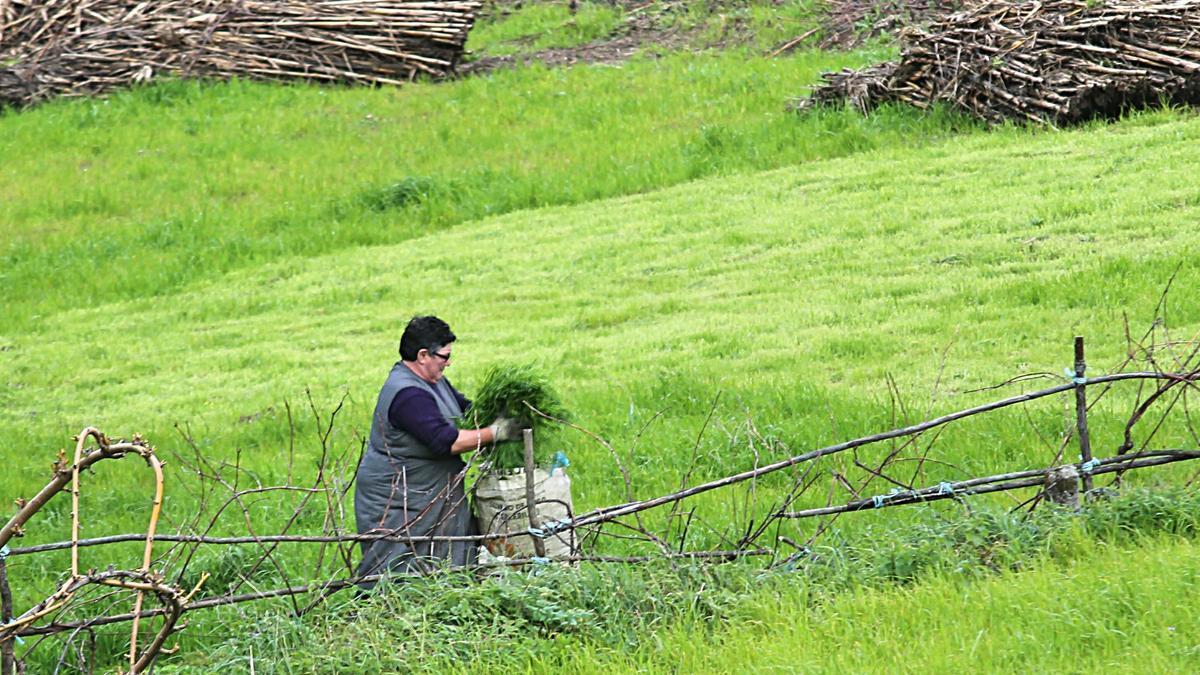 Una mujer trabajando en el campo en Marín.