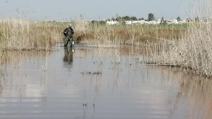 Torrevieja trata de contener una enorme plaga de mosquitos en las orillas de la laguna