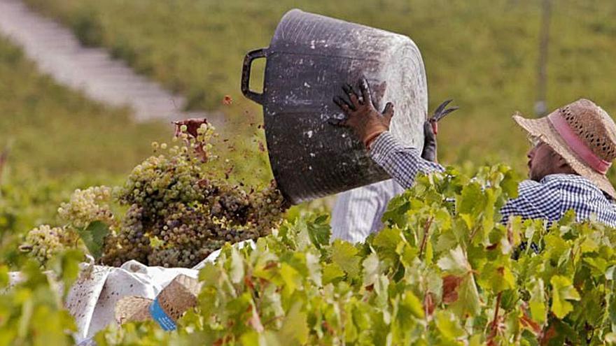 Unos 650 temporeros de la Región de Murcia viajan a la vendimia francesa