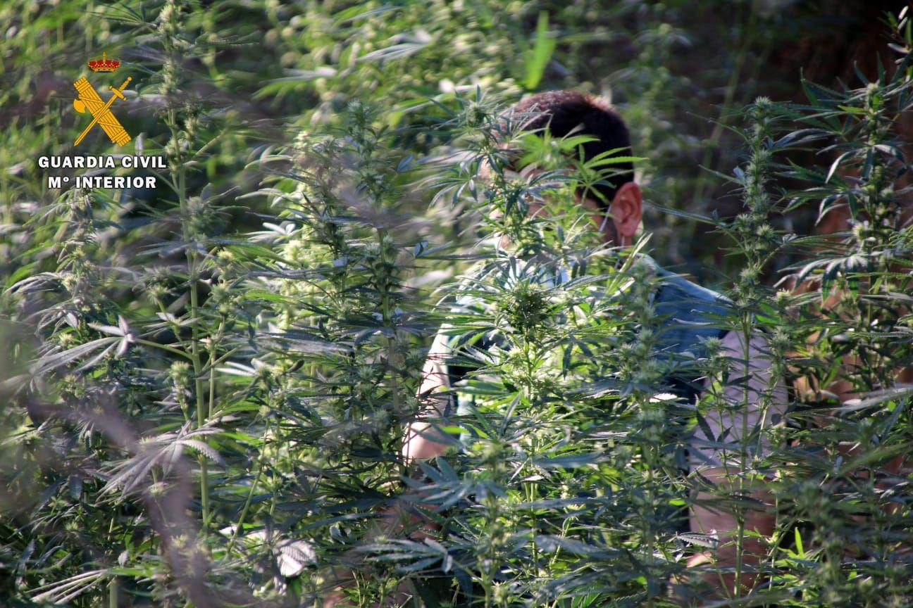 FOTOGALERÍA   Desmantelada una plantación de marihuana en Mequinenza