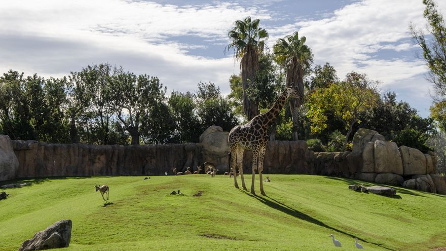 Bioparc València, 365 días de compromiso con el bienestar animal
