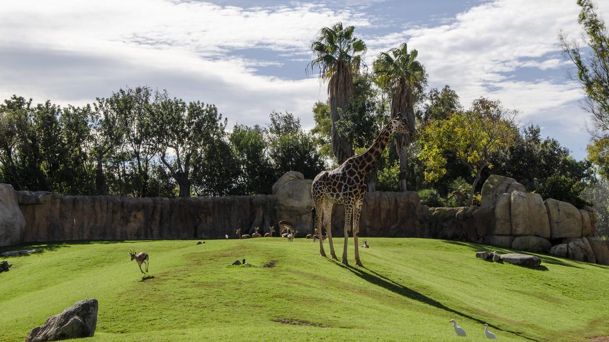 BIOPARC Valencia es uno de los mejores parques de animales del mundo.