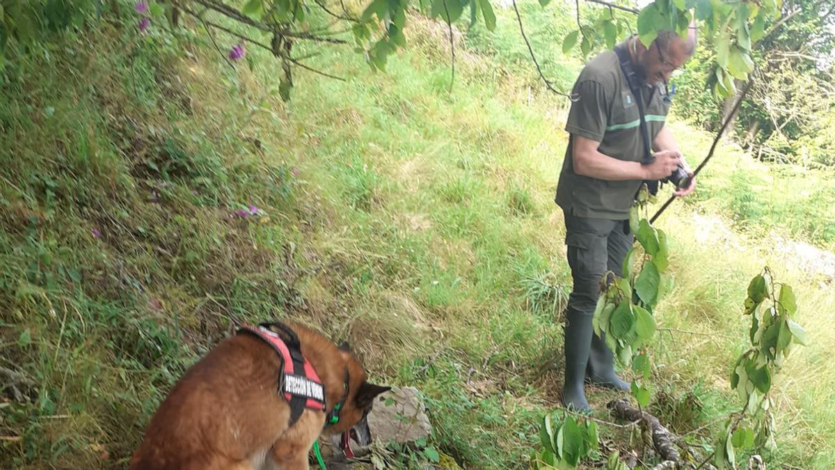 Un agente del medio rural en la zona en la que se ha localizado al oso. Medio Rural