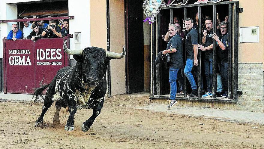 Octubre dispara los festejos de 'bous al carrer' en Castellón
