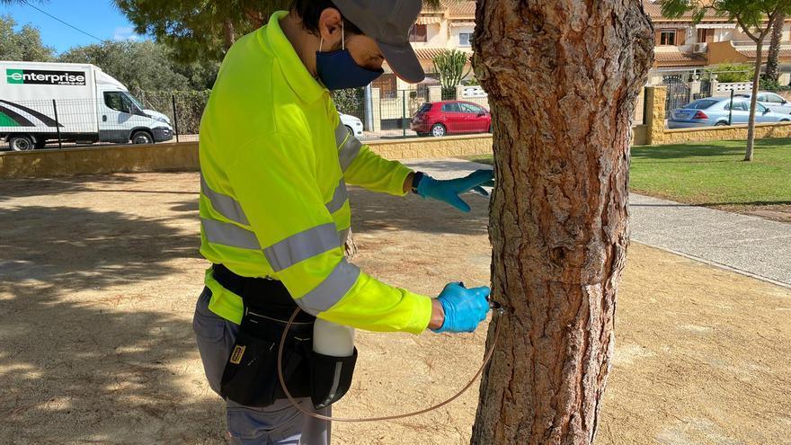 El Campello inicia el tratamiento contra la procesionaria de los pinos