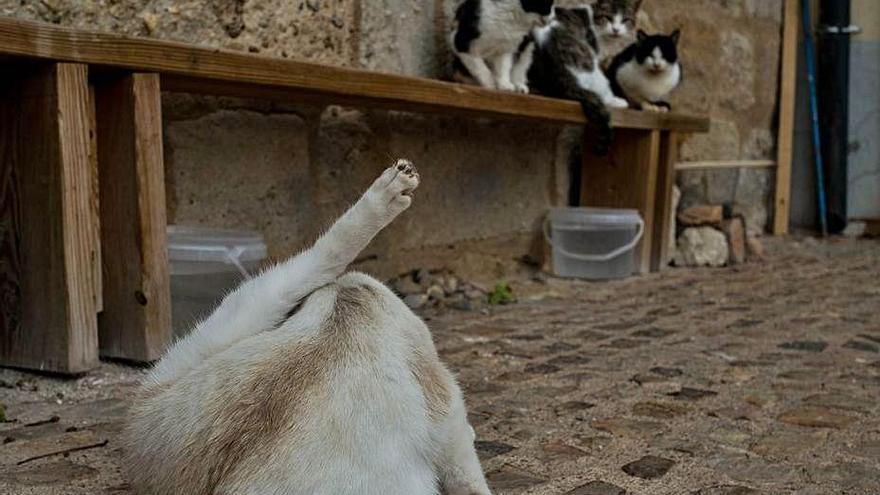 Colonia de gatos en la capital.