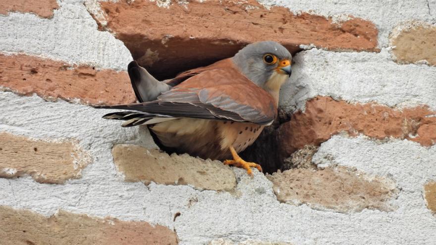 La Diputación de Málaga impulsa el potencial de la provincia como destino de turismo ornitológico