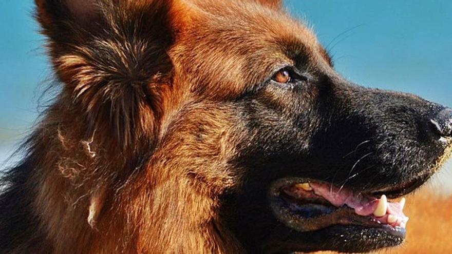 Acariciar un perro es la mejor medicina