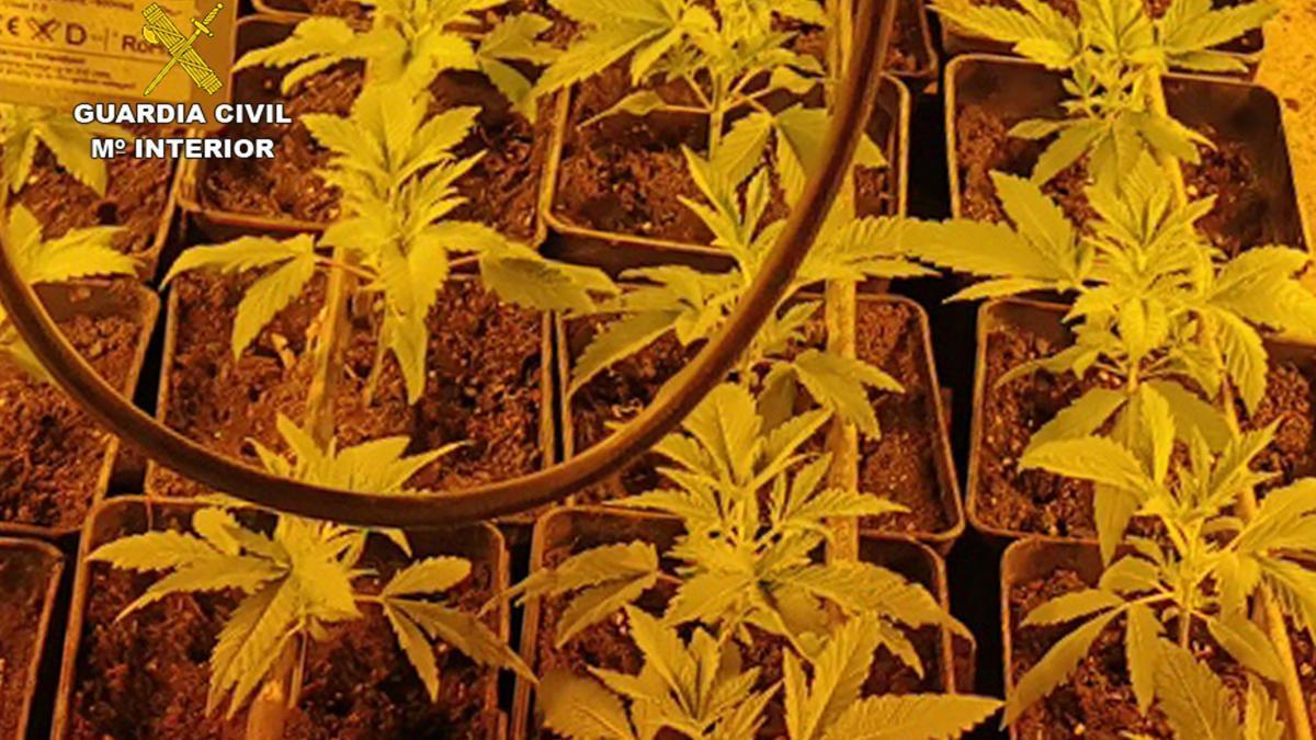 Algunas de las plantas recuperadas.