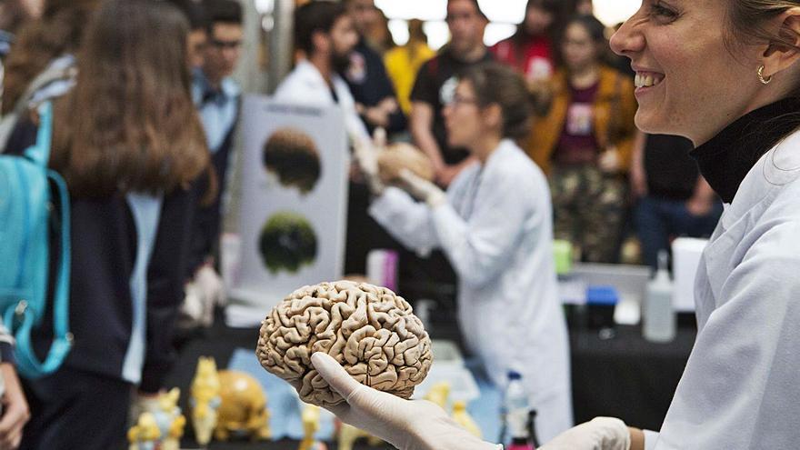 Doce descubrimientos del cerebro