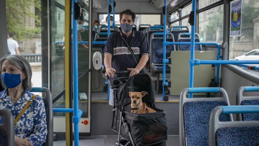"""Fifi"" ya se sube al autobús en Ourense"