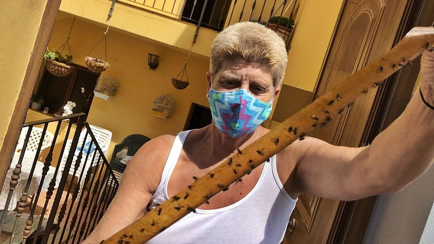 Santa María de Guía acumula tres meses soportando una fuerte plaga de moscas