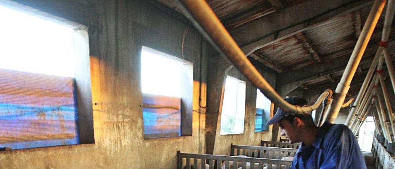 Imagen de archivo de una explotación ganadera de la Vall | PERALES IBORRA
